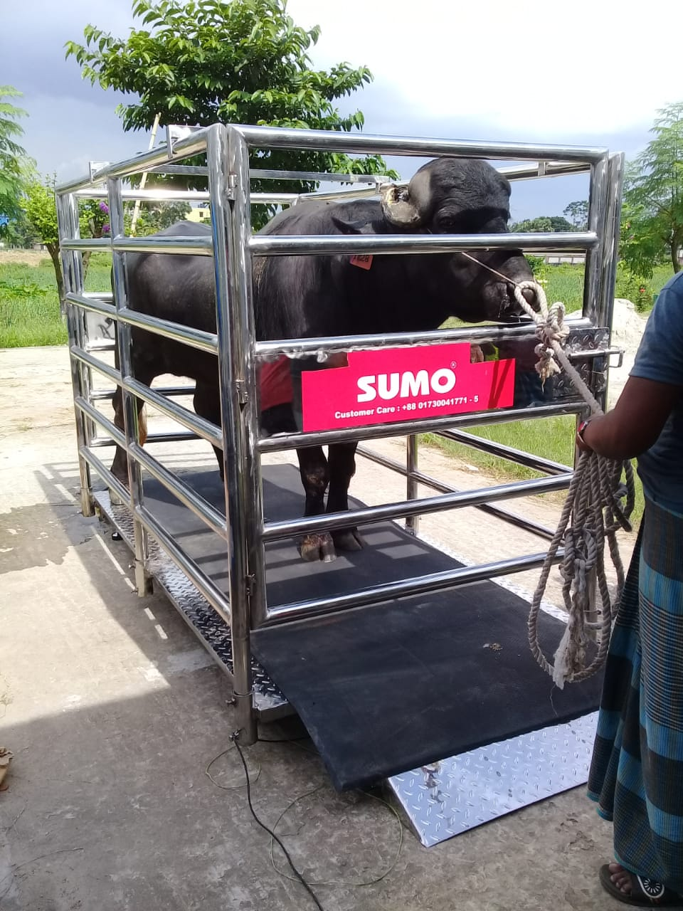 Stainless Steel Buffalo Scale 500 Kg to 3000 Kg